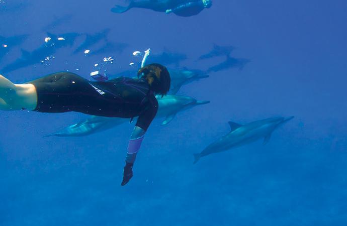 野生のイルカに出会える ハワイ島・ホオケナビーチ