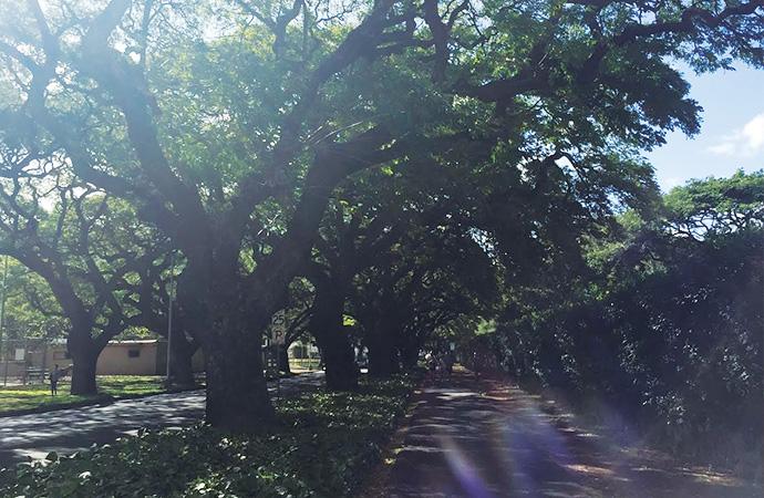 いい感じの木陰が続きます。