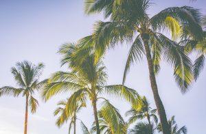 ハワイ留学についてよくある質問