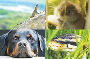 ハワイにゴキブリはいるの? 蛇がいないって本当? ハワイの動物事情