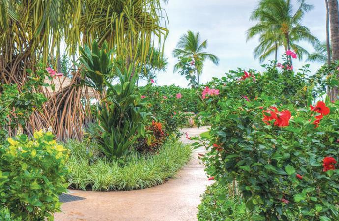 ハワイ で ワーキングホリデー はできますか?